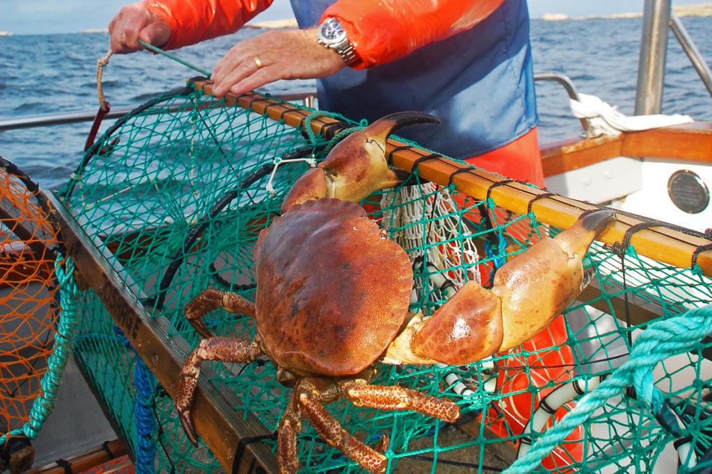 krabbfiske