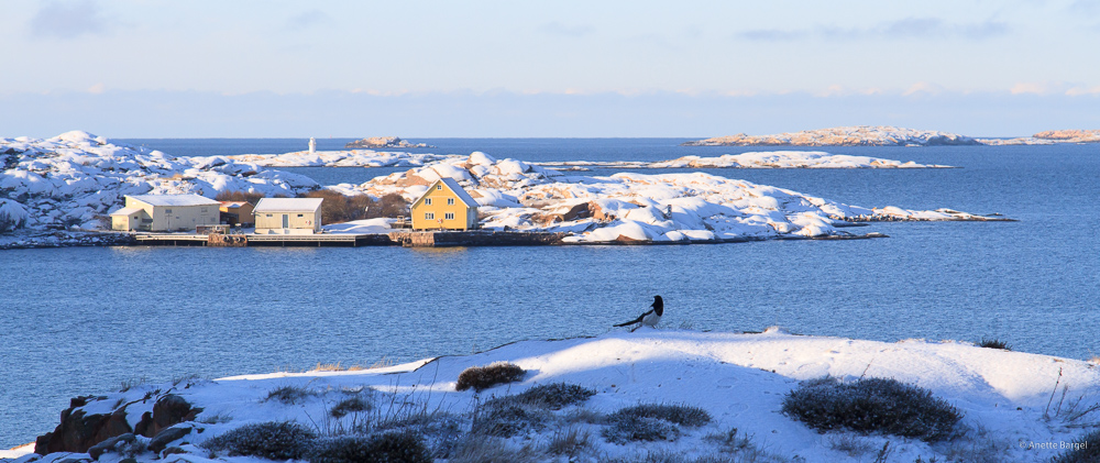 Vandring Lysekil Vinter Vintervandra Guide