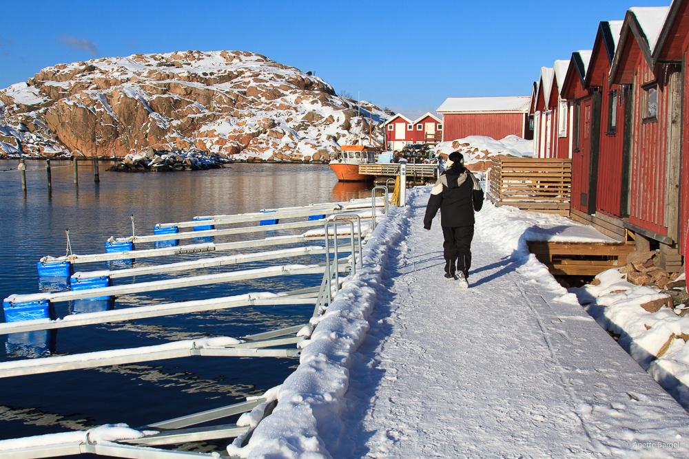 Vintervandra Lysekil Bohuslän